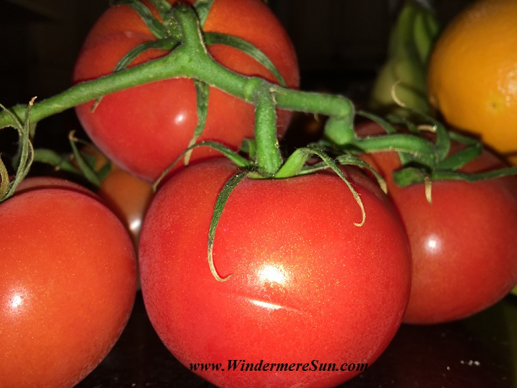WinterGardenFarmer'sMarket-tomatoes6 w blemishes final