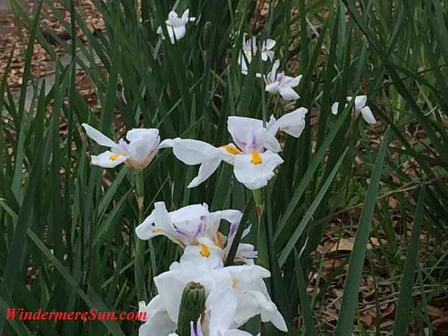 Windermere Neighborhood Flowers4 final