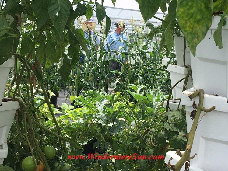 Bekemeyer Hydroponic Farm23 final