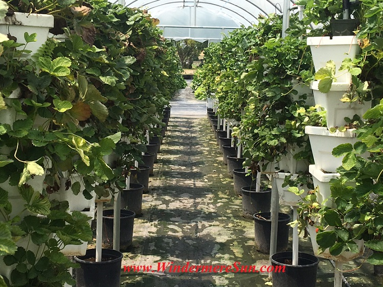 Bekemeyer Hydroponic Farm37 final