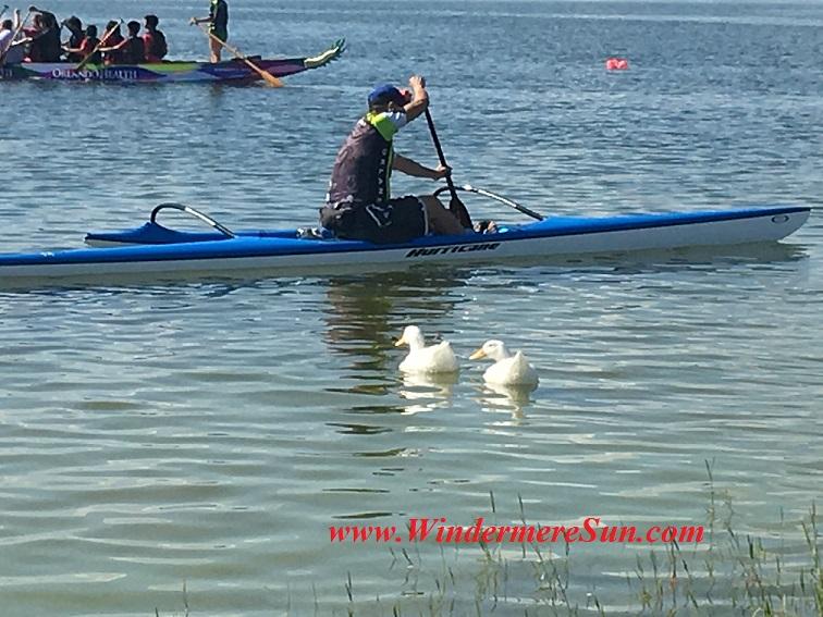 Dragon Boat Race 2016-35 ducks in the race final