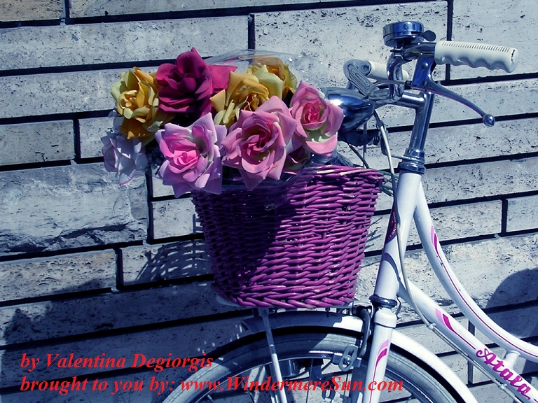 bike-false-roses-1488508, freeimages, by Valentina Degiorgis final