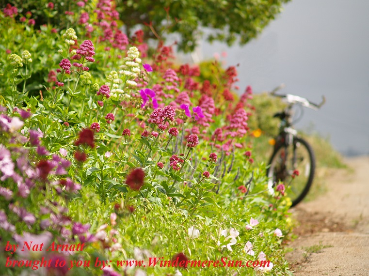 bike-with-flowers-1311528, freeimages, by Nat Arnatt final