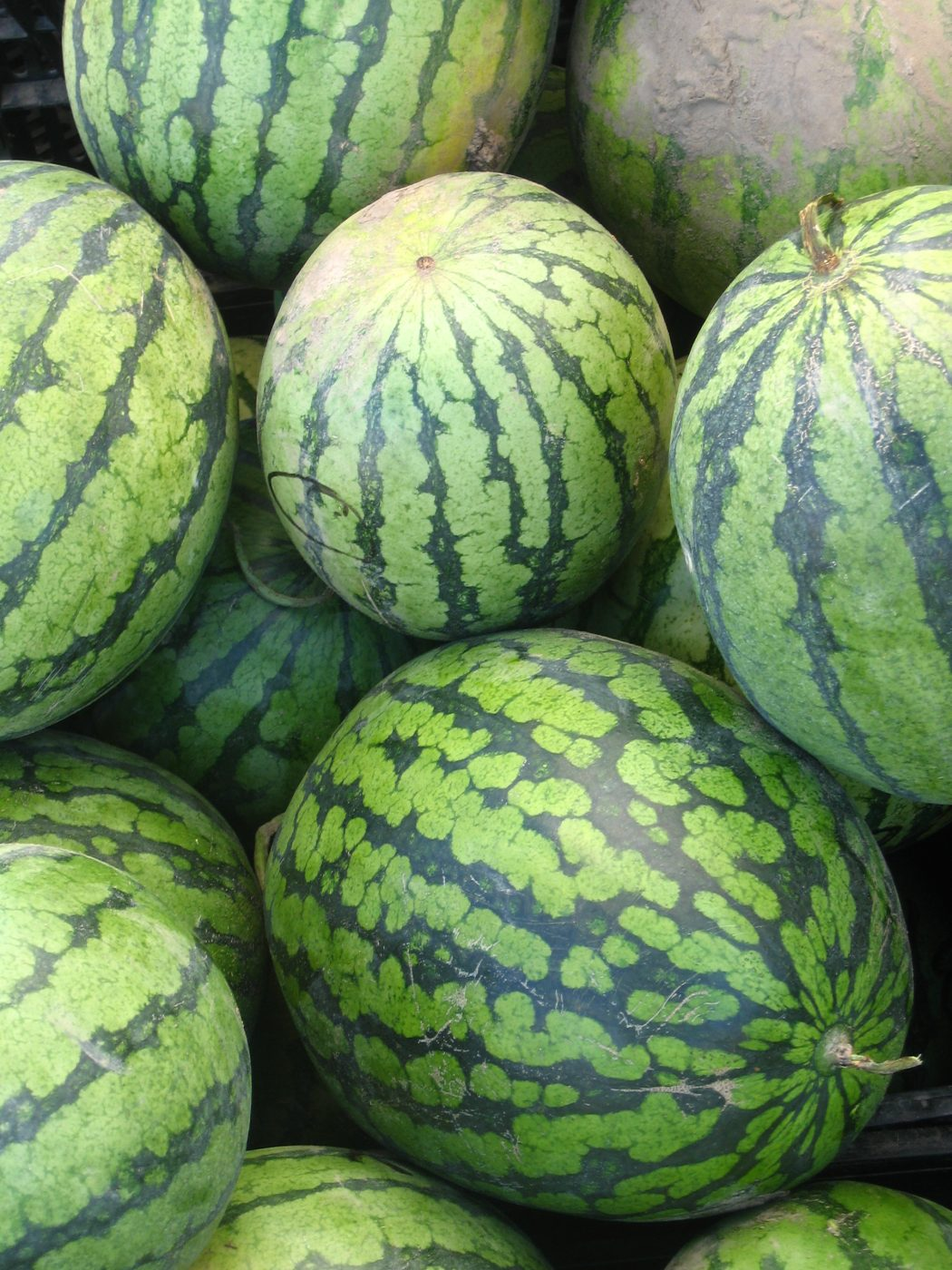 watermelon-watermelons-for-sale-2-1326352-freeimages-by-alistair-williamson