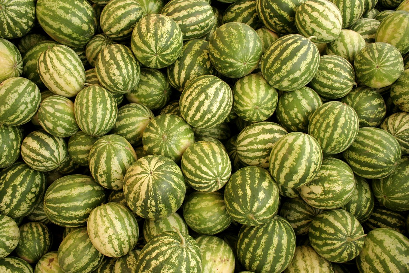 watermelons-watermelons-1621580-freeimages-by-mateusz-atroszko
