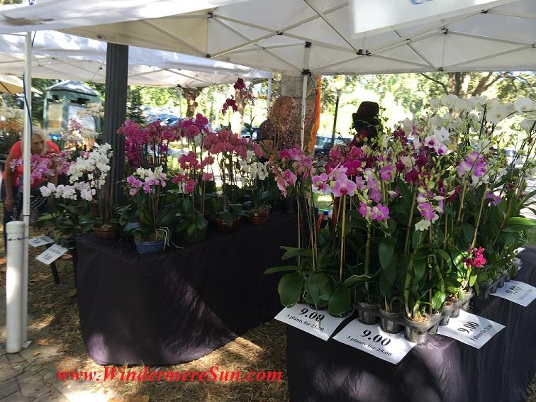 orchids-final