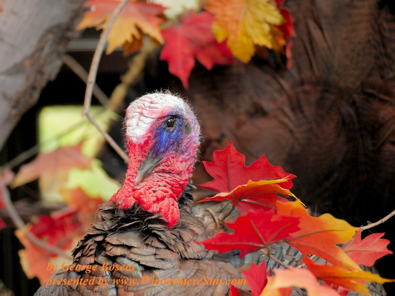 autumn-wildlife-1350583-freeimages-by-george-bosela-final