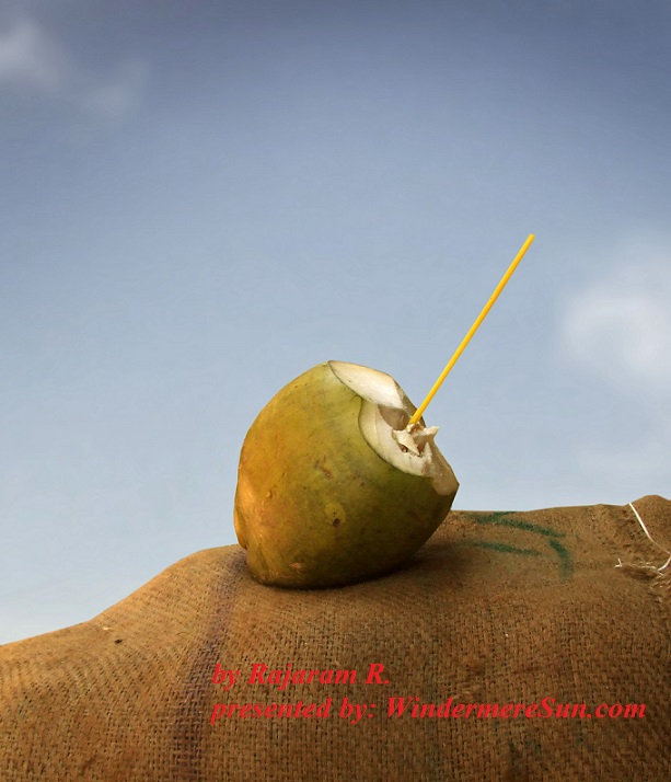 coconut-1323905-freeimages-by-rajaman-r-final