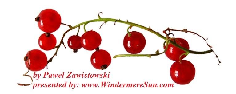 currant-1323518-freeimages-by-pawel-zawistowski-final