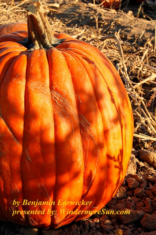 pumpkin-1325780-freeimages-by-benjamin-earwicker-final