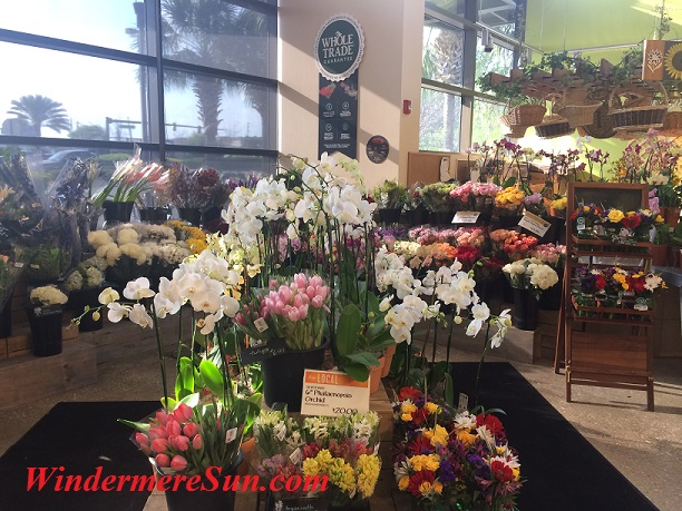 Whole Food-Orchids final