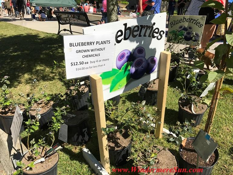 A Natural Farm-Blueberries final