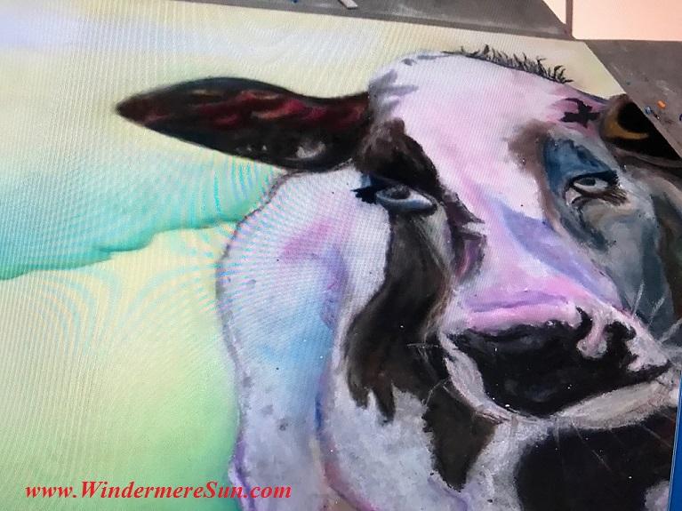 Cow #41 art work-1 final