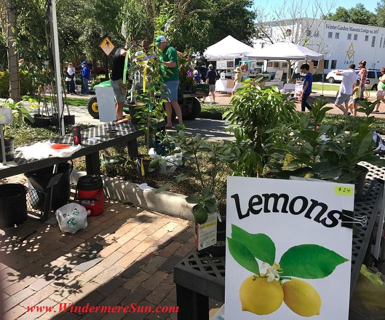 Lemons final