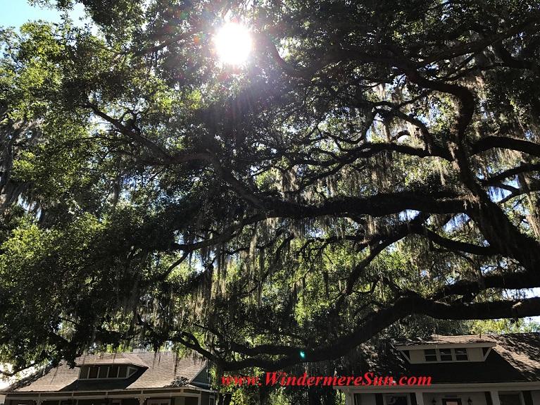 Sun shines through tree leaves-1 final