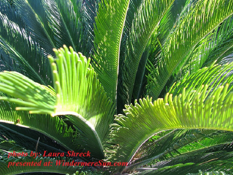 texas-garden-1-1248608, by Laura Shreck final