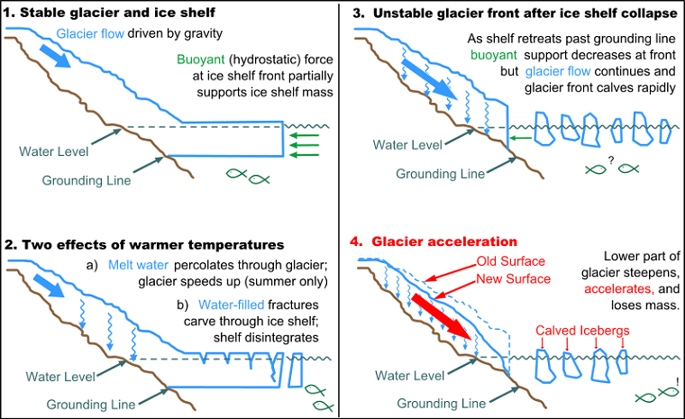 Glacier-ice_shelf_interactions, Original Image by Ted Scambos and Michon Scott, National Snow and Ice Data Center. Redrawn by Sagredo final