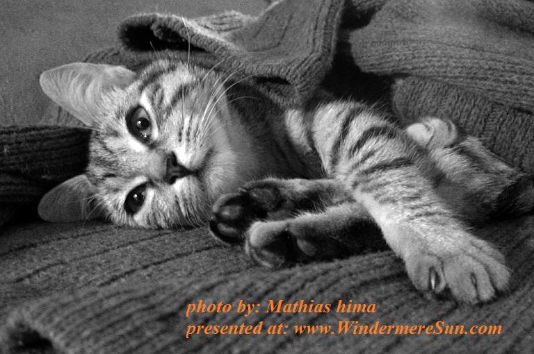 cat-louise-1521030, by Mathias hima, pet of 6-2-2017 final