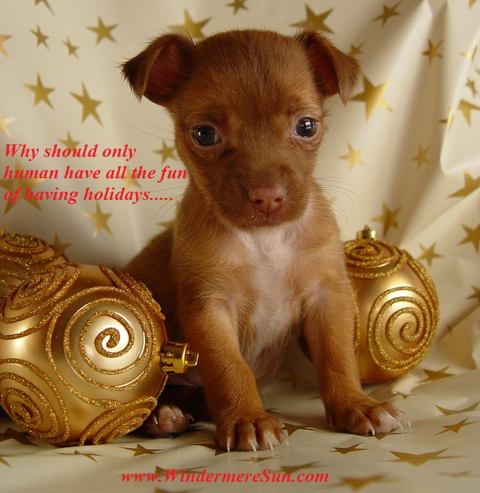 christmas-dog-1407593, freeimages, by Oscar hdz final 2