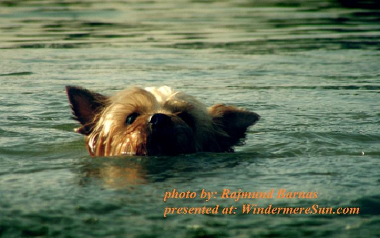 swimming-little-dog-1391382, by Rajmund Barnas final