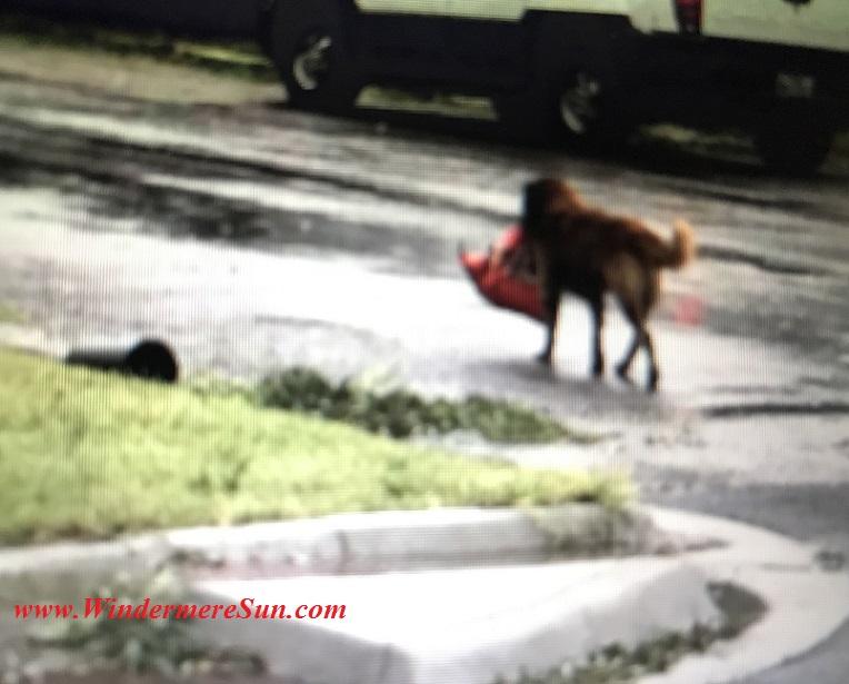 Dog Otis with his bag of dogfood final