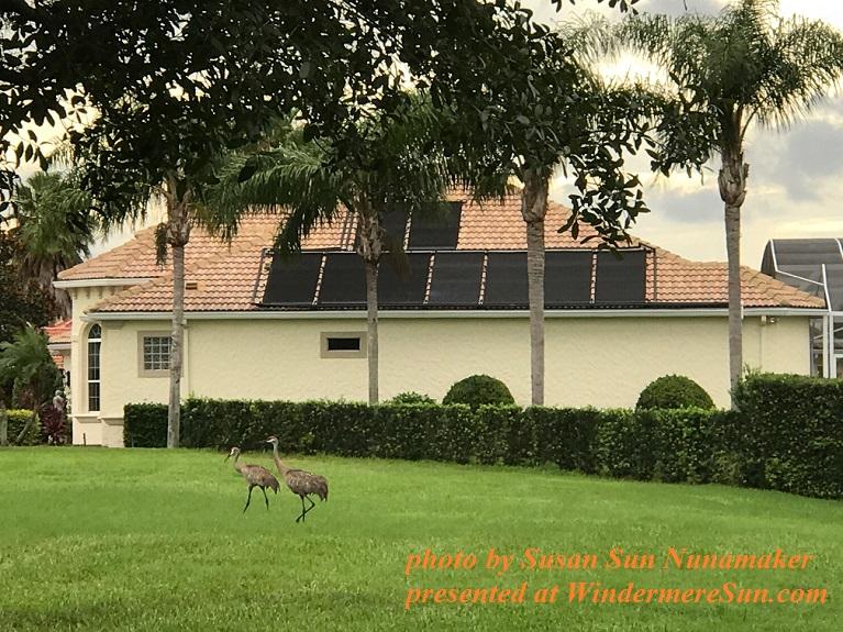 cranes and solar panels final