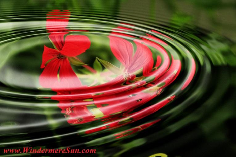 geranium-wave-water-rings-55813 final
