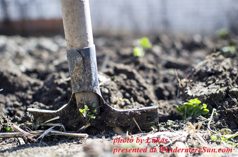 Dig garden