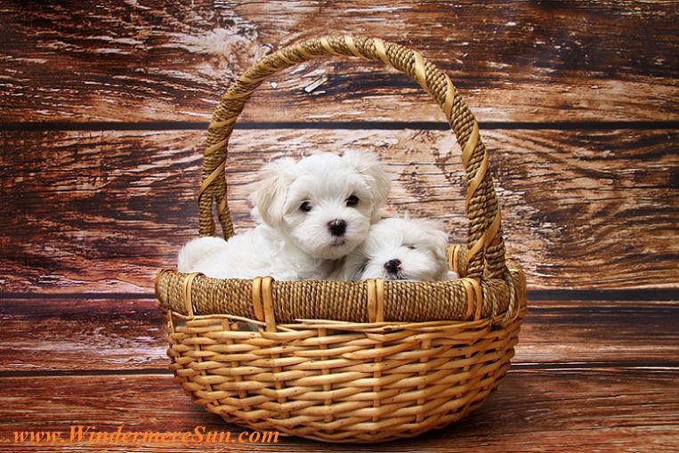 basket of puppies-pexels-photo-271824, pet of 09-02-2017 final
