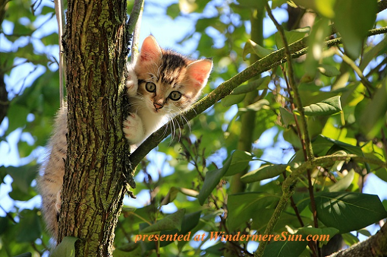 cat up in a tree. pexels-photo-257532, pet of 9-23-2017 final