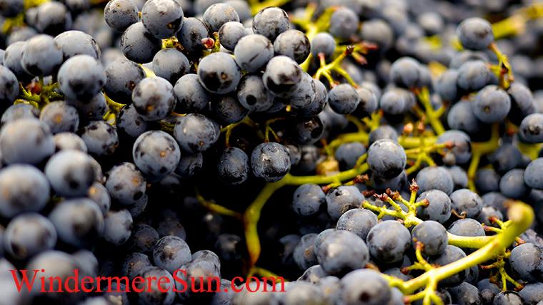 abundance-blueberries-pexels-photo-357742 final
