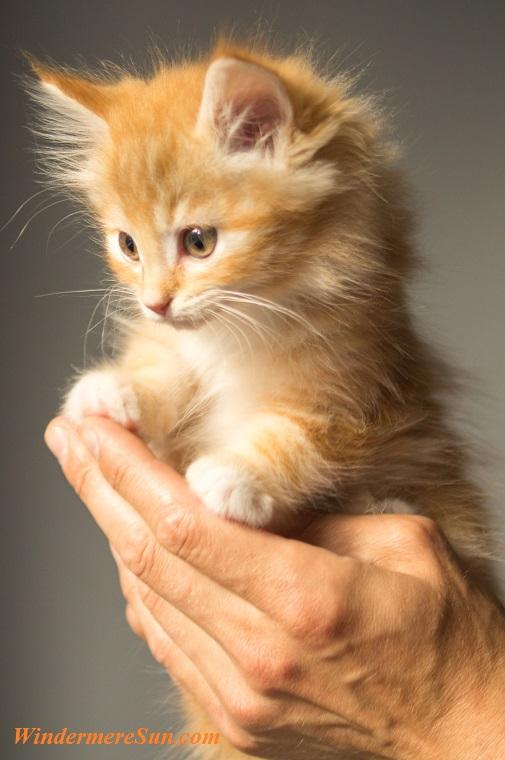 cute-kitten-cat, 12-2-2017 final