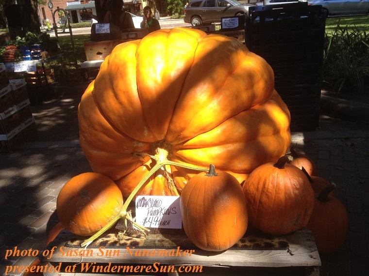 pumpkin huge Windermere Farmer's Market final