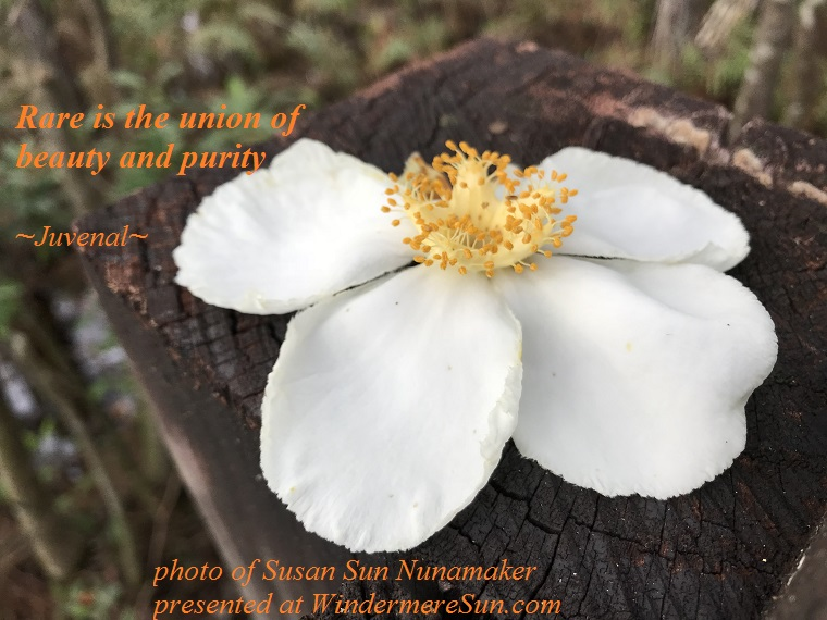 quote-12-23-2017-Rare is the union of beauty and purity, quote of Juvenal, photo of Susan Sun Nunamaker
