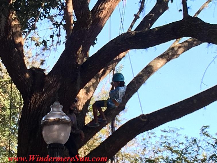Windermere-Treebute1 tree climb-final