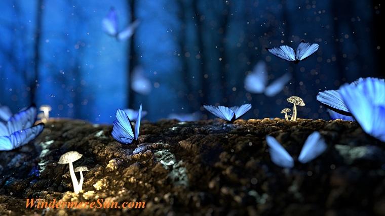 butterflies, blue,pexels-photo-326055 final