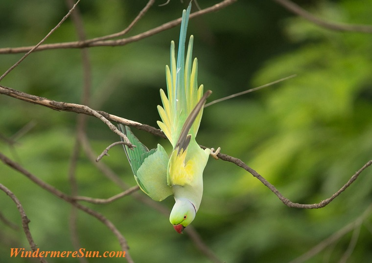 parrot, doing gymnastics, pexels-photo-135940 final