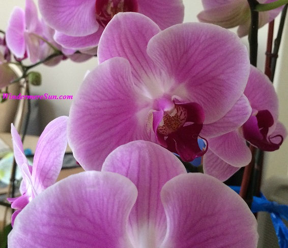 Orchids69 final