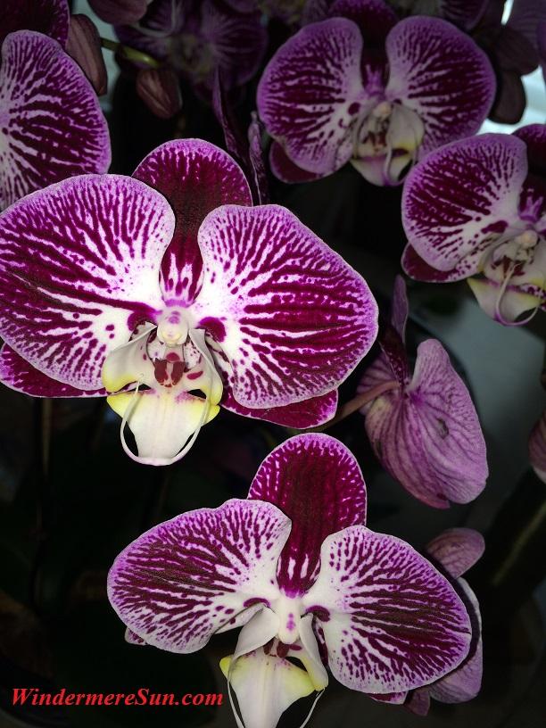 Orchids8 final