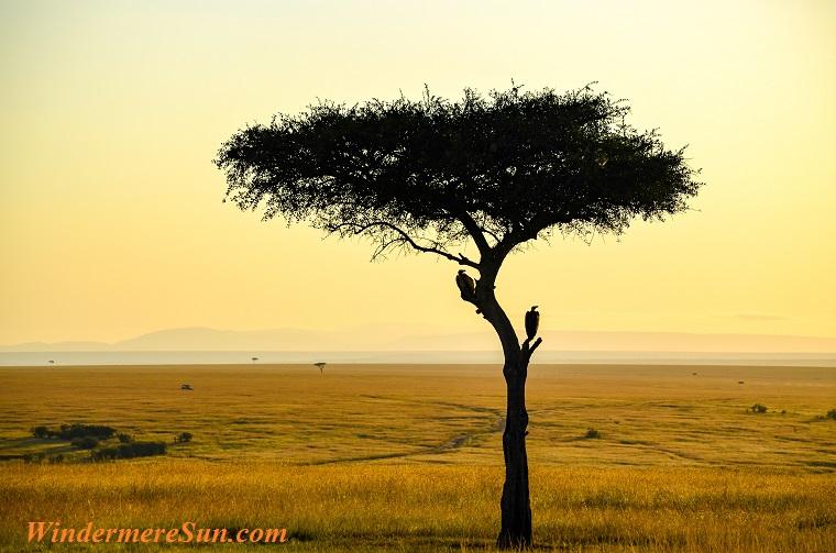 single tree, pexels-photo-925991 final