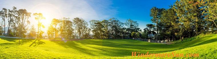 sun tree and grass, pexels-photo-356977 final
