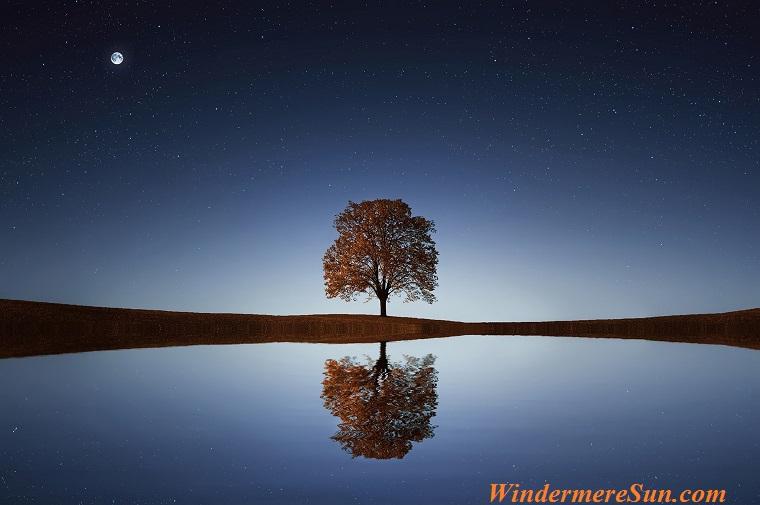 tree, reflection, moon, pexels-photo-268533 final