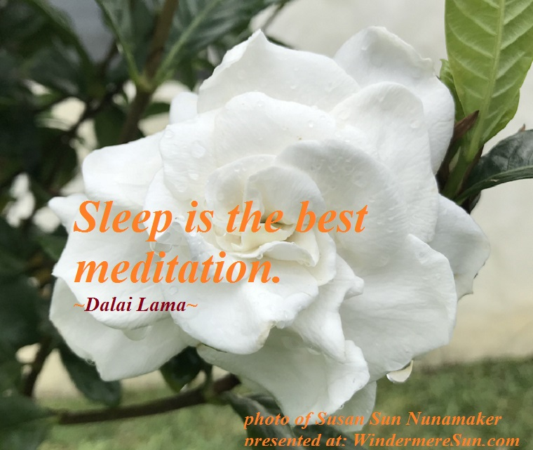 quote of 6-9-2018, Gardenia, Sleep is the best meditation, quote of Dalai Lama, photo of Susan Sun Nunamaker final