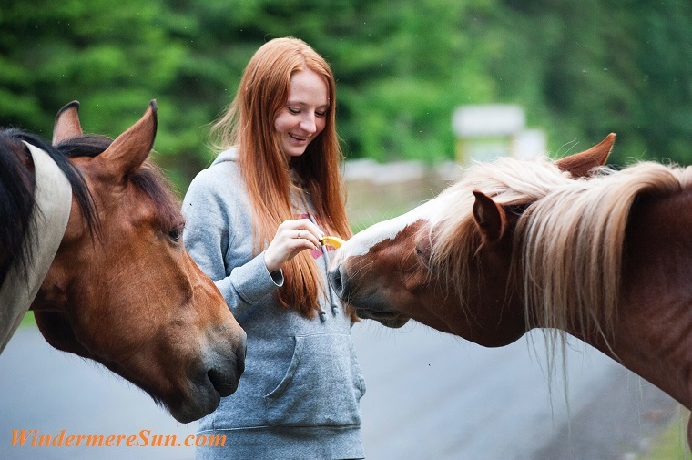 pet of 08-04-2018, horses, animal-attractive-blur-1172325 final