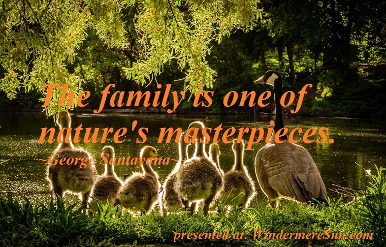 quote of 08-04-2018, The family is one of nature's masterpieces, duck family, animals-back-light-beaks-733478 final final