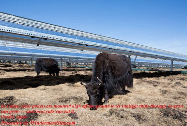 Apple, renewable_energy_apple_hongyuancn_sunpower,.In China, solar panels are mounted high off the ground to let sunlight shine through, so grass can grow-amd local yaks can eat it final