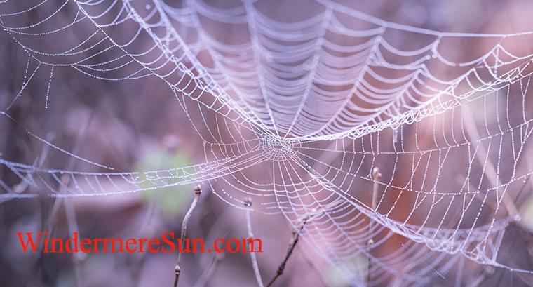 Halloween-spiderweb-pexels-photo-217877 final
