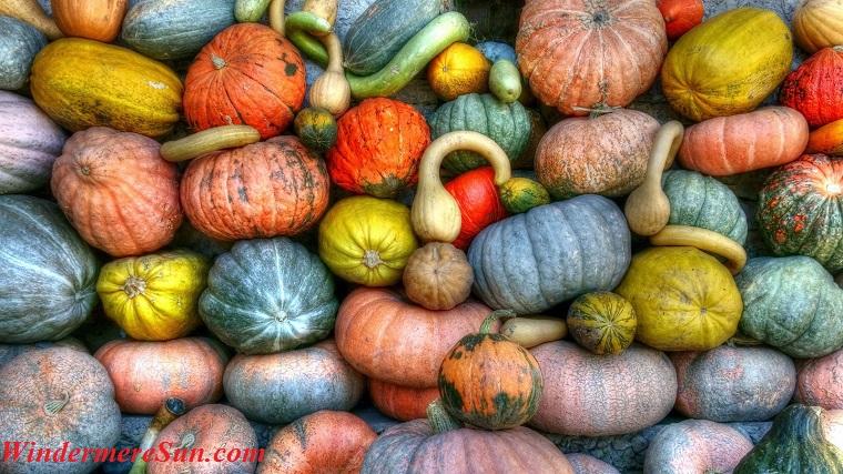abundance-agriculture-crop-157310 final
