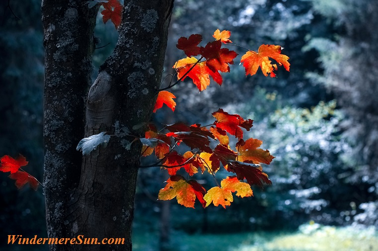 autumn-autumn-leaves-blur-589840 final
