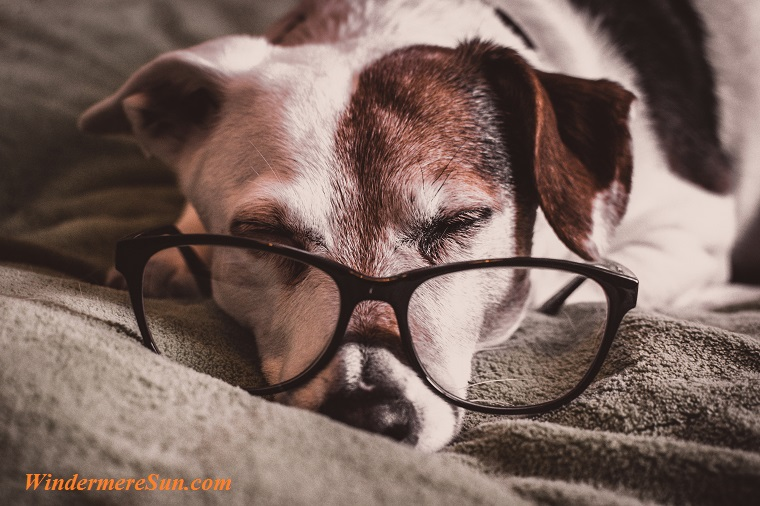 pet of 10-27-2018, dog with glasses, learning somthing while sleeping, animal-animal-photography-breed-1009922 final